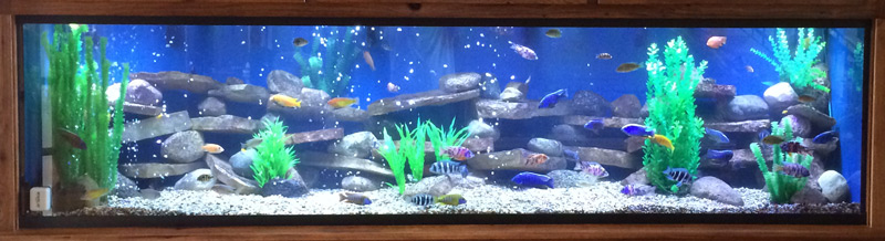 375-gallon-custom-glass-aquarium-cropped